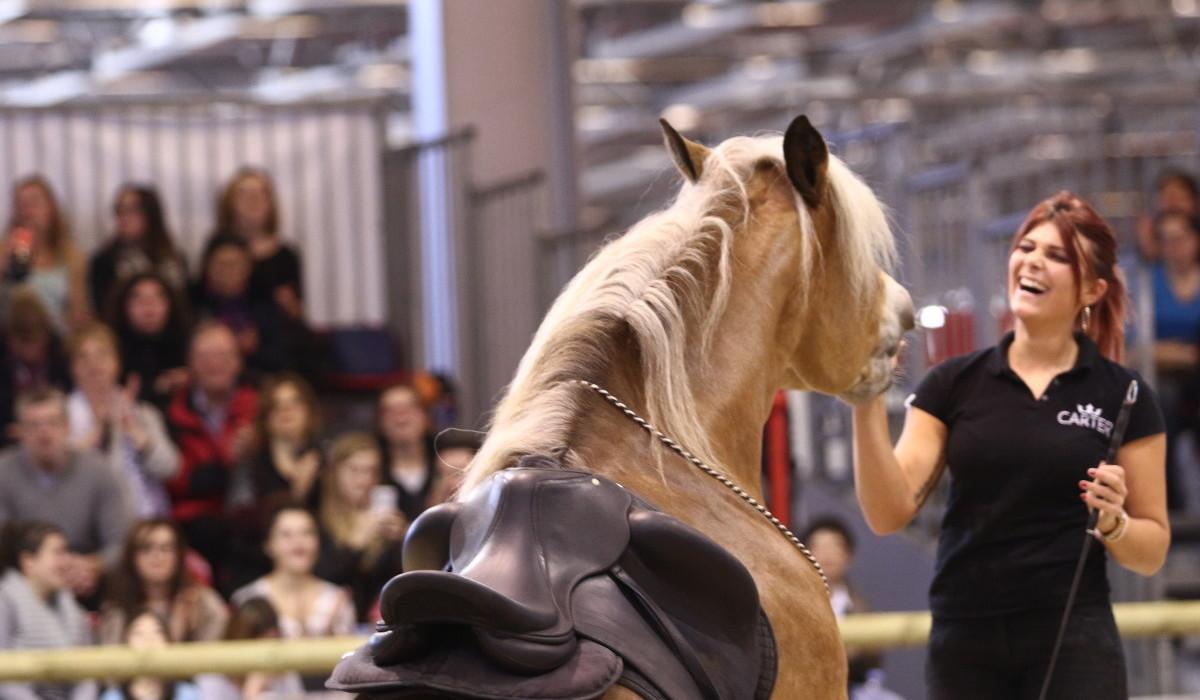 Le Salon du Cheval 2016, l'événement équestre de l'année!