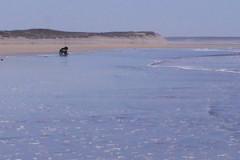 Les plages de l'île d'Oléron