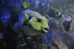 Aquarium de Canet en Roussillon