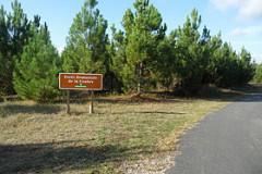 Forêt domaniale de la Coubre