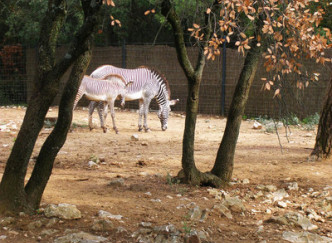 Parc Zoologique de Lunaret