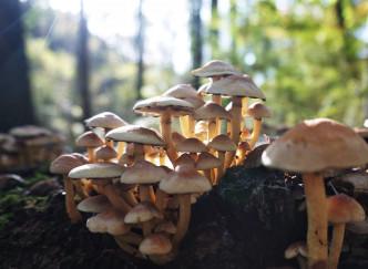 Les forêts à champignons