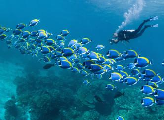 Les meilleurs spots de plongée en France méditerranéenne
