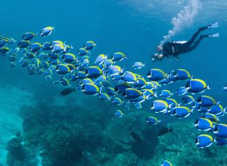 Les plus beaux sites de plongée de la Côte d'Azur