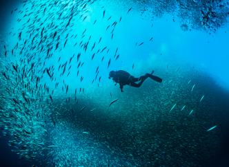 Où faire de la plongée en Corse ?