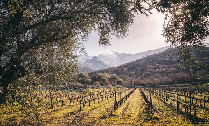 Sur la route des vins Corses