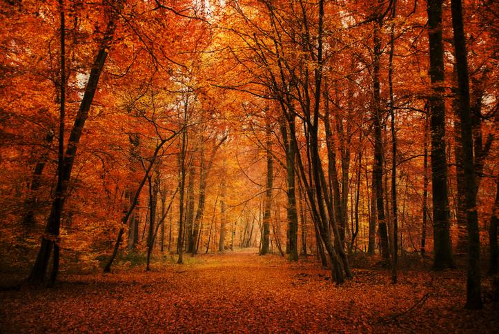 Les plus belles forêts en automne