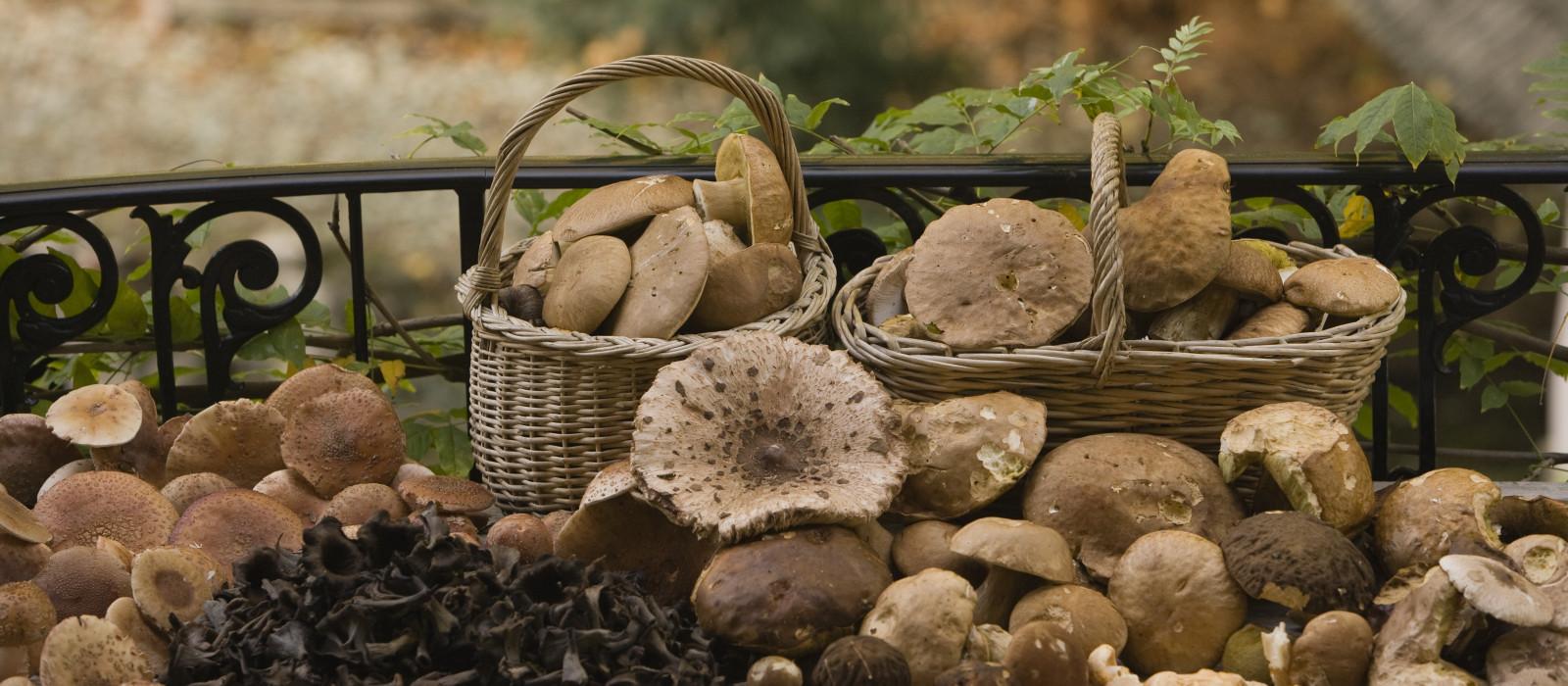 Où ramasser des champignons cet automne ?