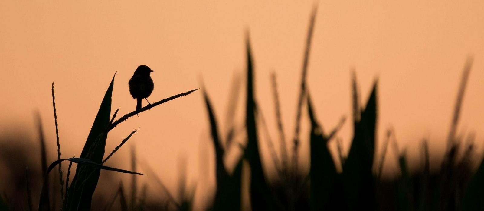 La Baie de Somme à l'honneur lors du Festival de l'Oiseau et de la Nature