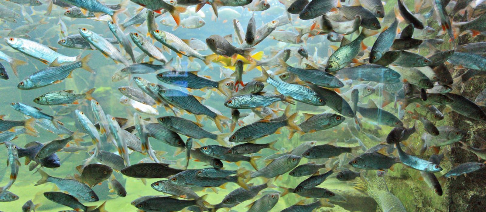 Parc aquarium du Périgord Noir