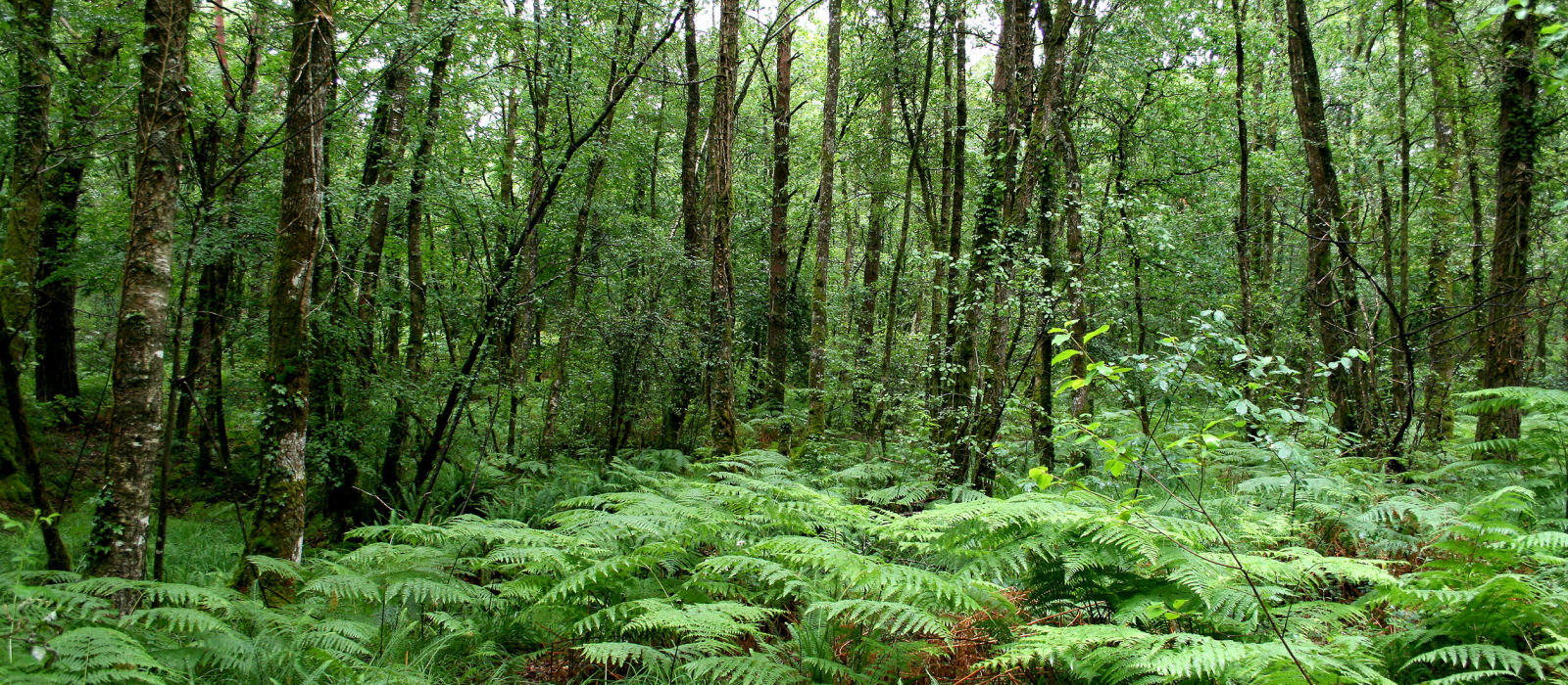 La forêt de Brocéliande, une terre de légendes