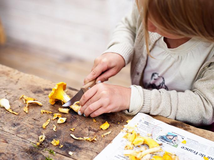 Cueillir des champignons en famille : mode d'emploi