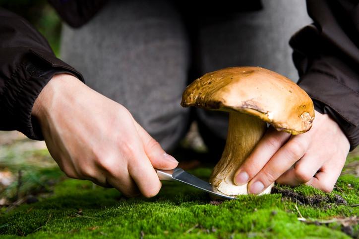 Petit guide du parfait cueilleur de champignons