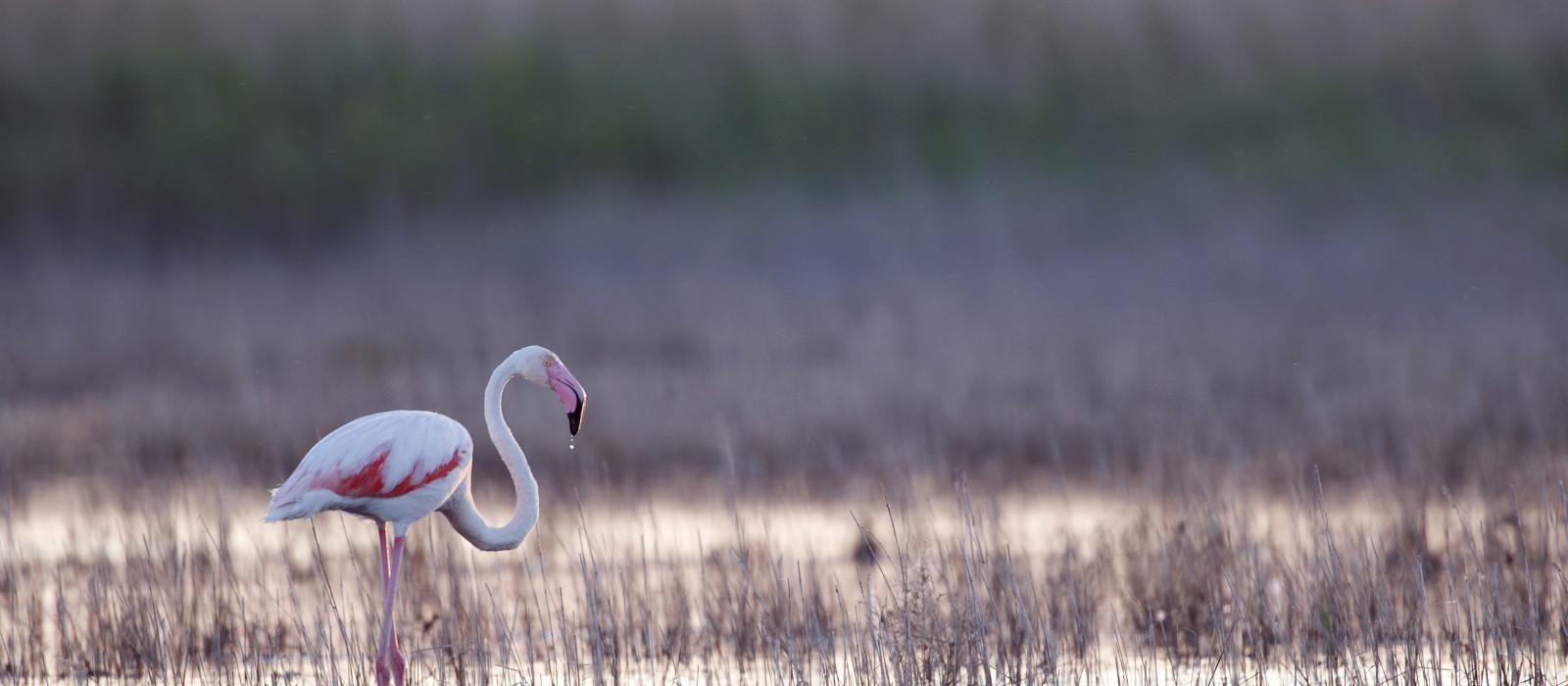 Les animaux à observer en pleine nature