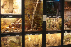 Musée des beaux-arts et d'histoire naturelle