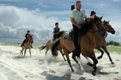Balade équestre en Baie d'Authie