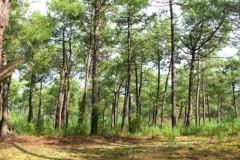 Forêt de Longeville-sur-Mer