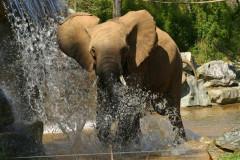 Parc Zoologique de la Flèche