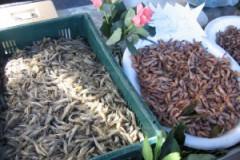 Marché aux poissons d'Honfleur