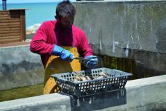 L'Auberge paysanne de la mer