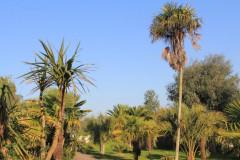 Camping des palmiers