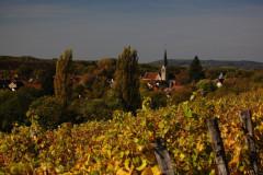 La Route des Vins du Jura