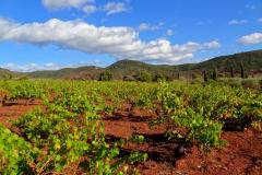 Découverte et Oenologie avec Wisud: dégustation dans les terres rouges