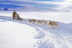 Promenades en chiens de traineau
