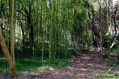 Arpentez la bambouseraie et le jardin des 9 demoiselles