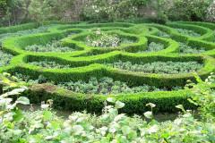 Le Jardin d'Elsie ou la promenade historique de la rose
