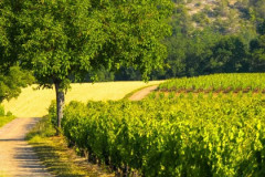 Vallée du vignoble de Cahors
