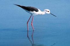 Observation des oiseaux aux Vieux Salins