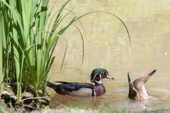 Parc ornithologique