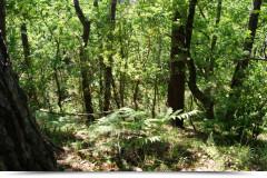 La forêt usagère