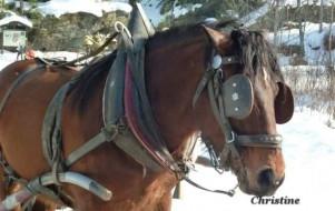 Balade en traineau à cheval sur le Mont Joly