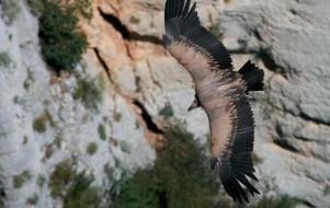 Balade nature autours des vautours du Verdon