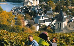 Le Vignoble d'Anjou et de Saumur
