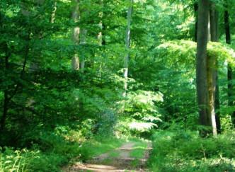 Arboretum de Lyons