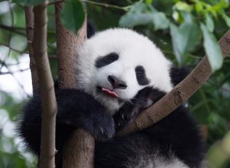 Top 5 des parcs animaliers français à ne pas manquer !