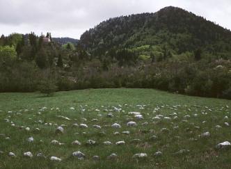 Du repos dans l'Isère avec le parc naturel régional du Vercors
