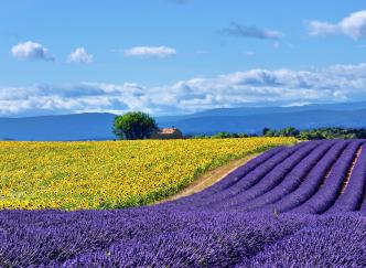 Les incontournables pour une semaine idéale en Provence