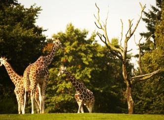 Les plus beaux parcs animaliers