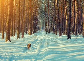 Les plus belles promenades à faire le jour de Noël