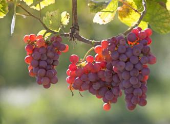 8 très bonnes raisons de boire du vin