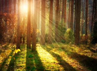 Les plus belles forêts à photographier en automne