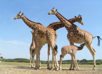 Un safari sans quitter la France