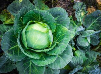 Jardinage : les meilleurs légumes à planter en hiver selon les régions