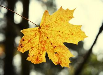 5 astuces pour éviter la déprime de l'automne