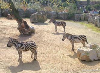 Le zoo de Lille