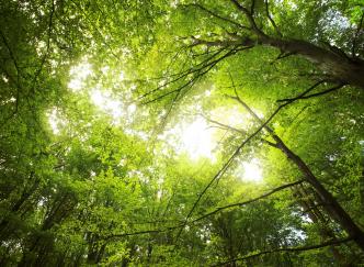 À essayer : un séjour insolite dans une cabane design perchée dans les arbres